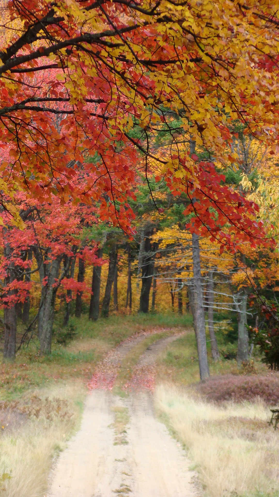 Fall in the Moose River Plains