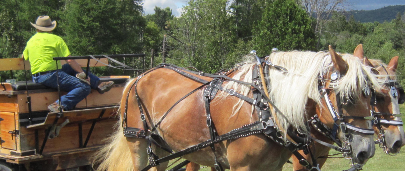 Penfield Homestead Museum's Heritage Day