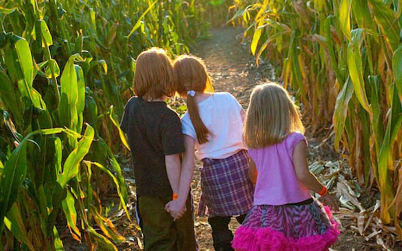 Heroic Corn Maze: A Corn Maze Adventure