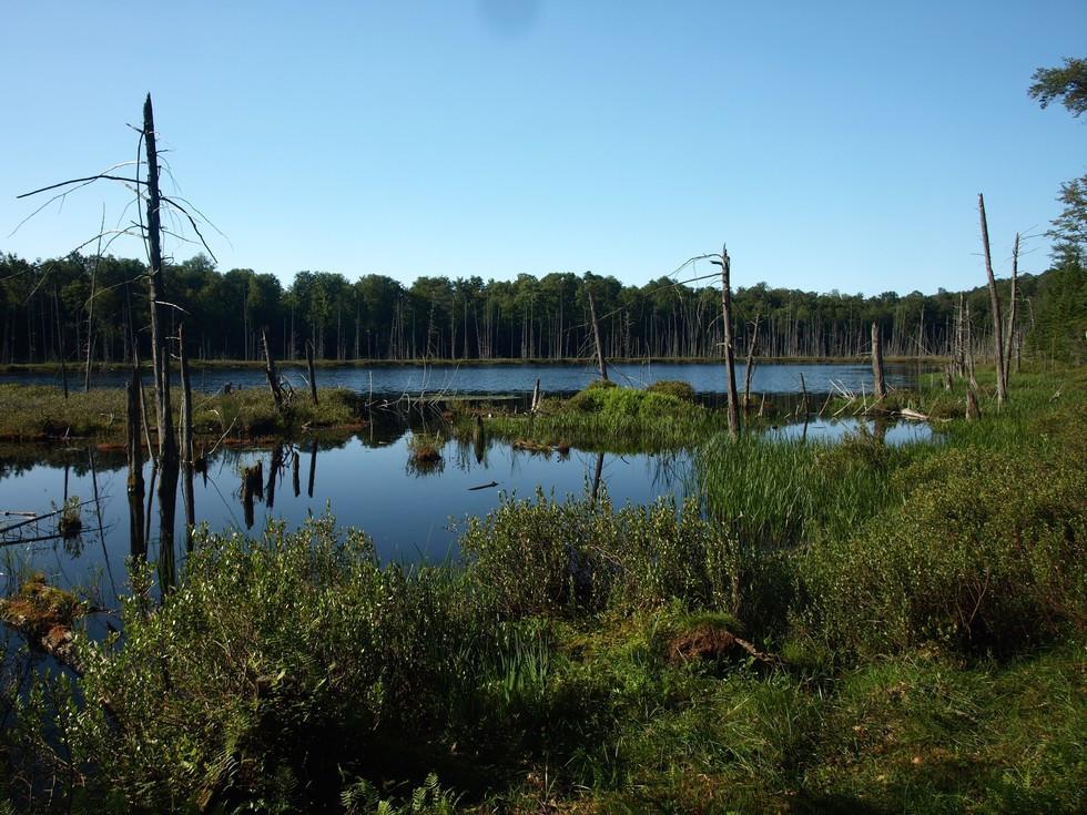 Bear Pond Loop