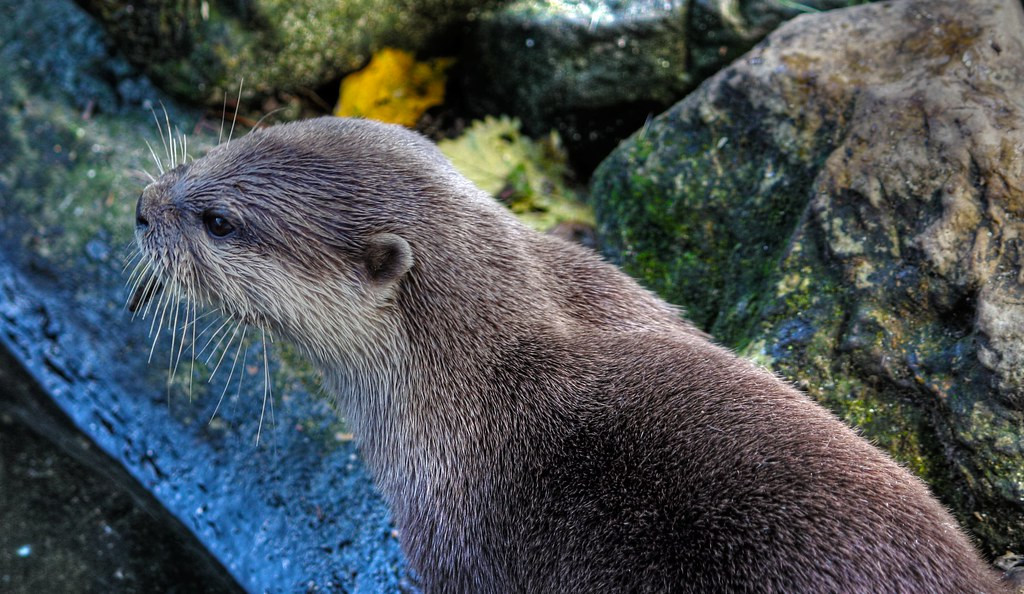 55+ Otter Walks!