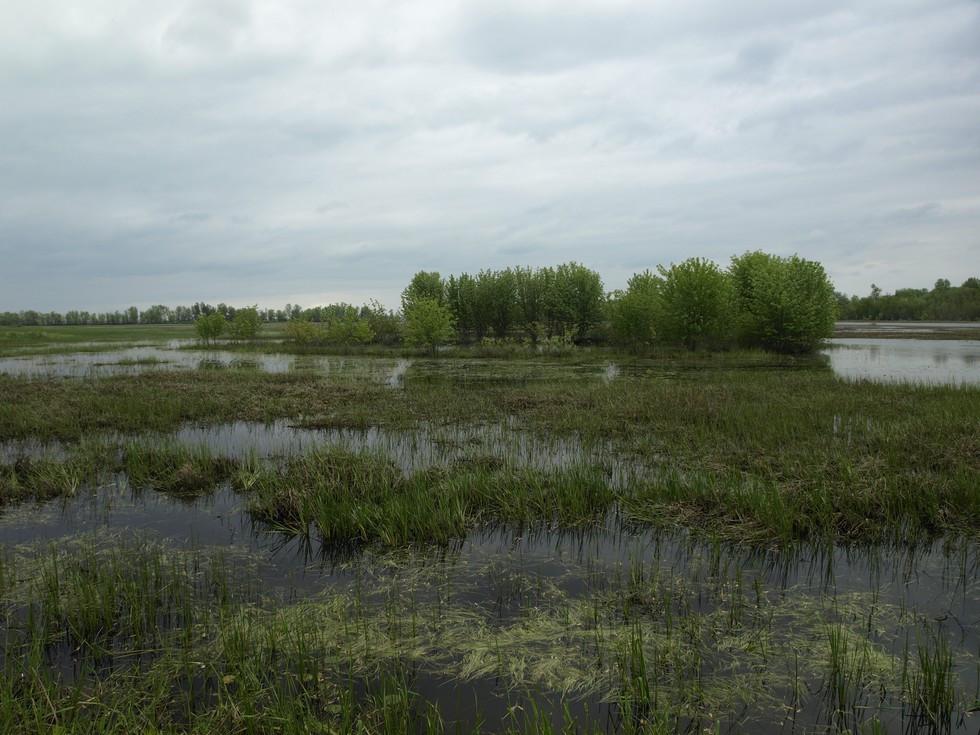 Ausable Marsh State Game Management Area Hiking | Lake Champlain NY