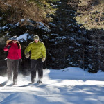 Winter Forest Bathing