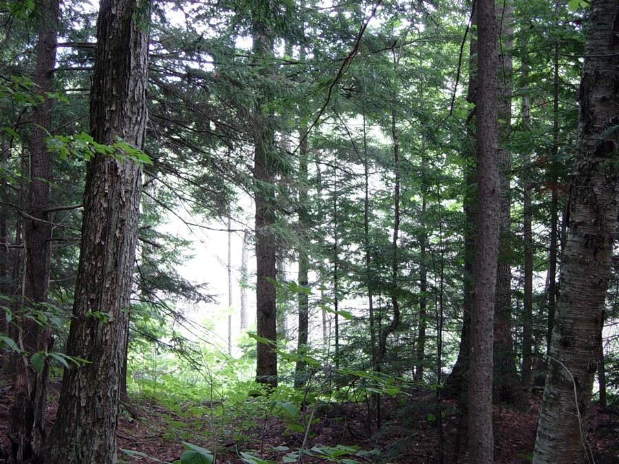 Hammond Pond Wild Forest