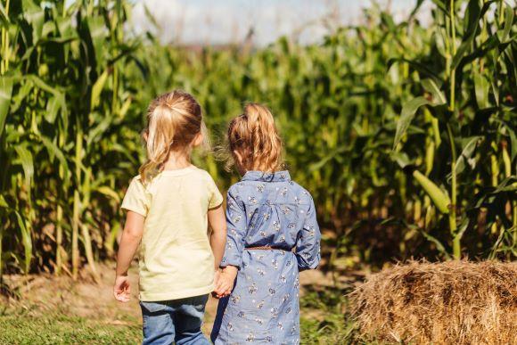 Fort Ticonderoga's Heroic Maze: A Corn Maze Adventure