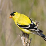 Guided Birding Hike at Crown Point State Historic Site