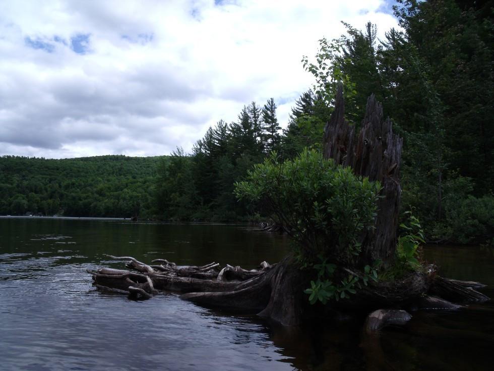 Lincoln Pond