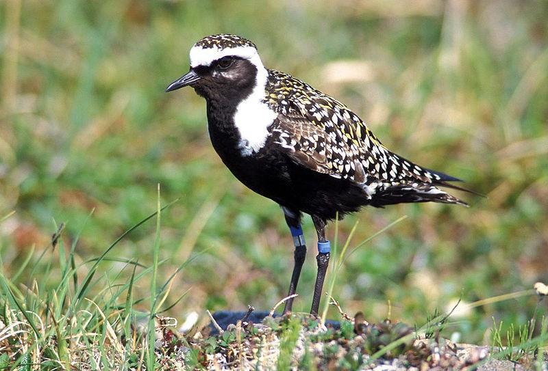 Noblewood Park birding